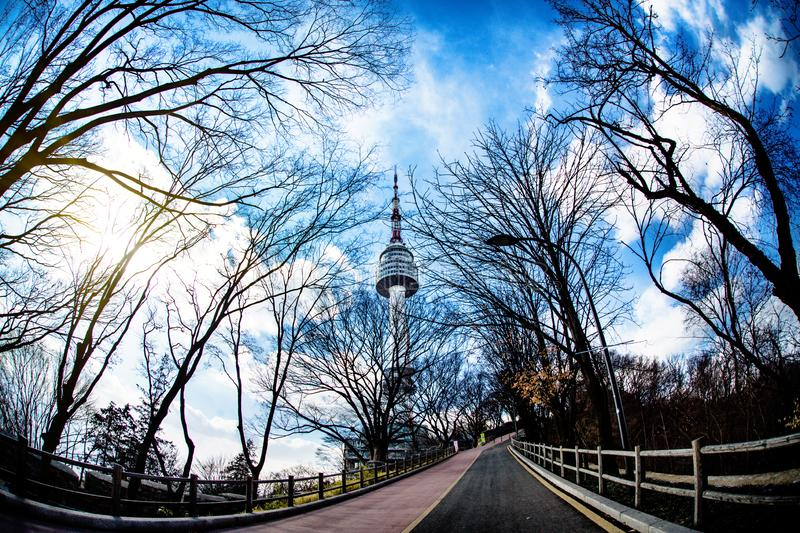 Himmel- och trädfilial Den mest härliga sikten av det Seoul tornet på vintern i Korea royaltyfria foton