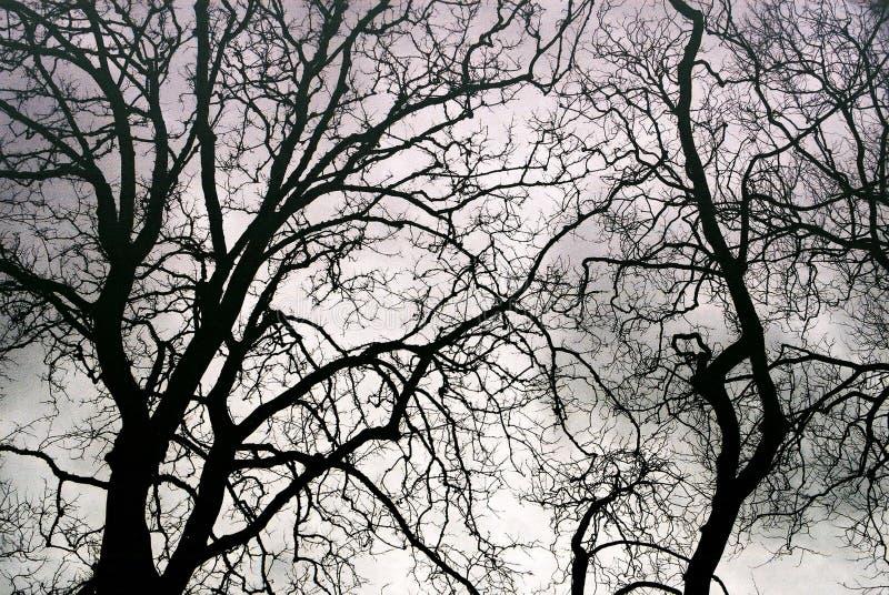 Himmel ` s Blutgefäße lizenzfreie stockfotos