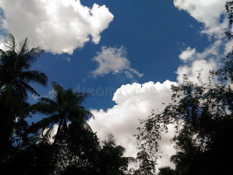 Himmel & träd royaltyfria bilder
