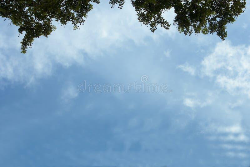 Himmel- und Blatthintergrund lizenzfreies stockfoto