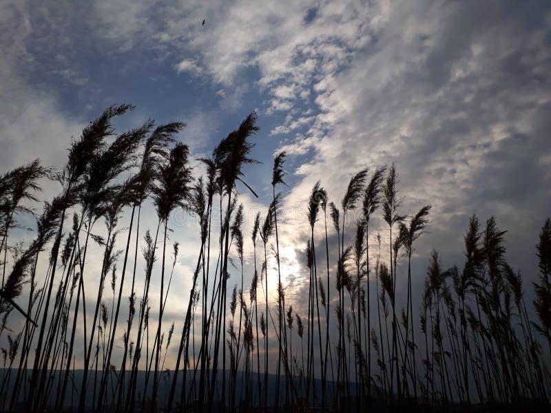 Himmel und Herbst im Park stockfoto
