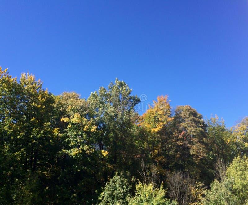 Himmel und Natur stockbild