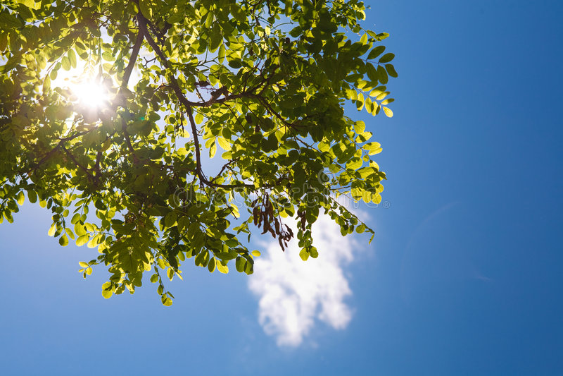 Himmel und Sonne in den Bäumen stockfoto
