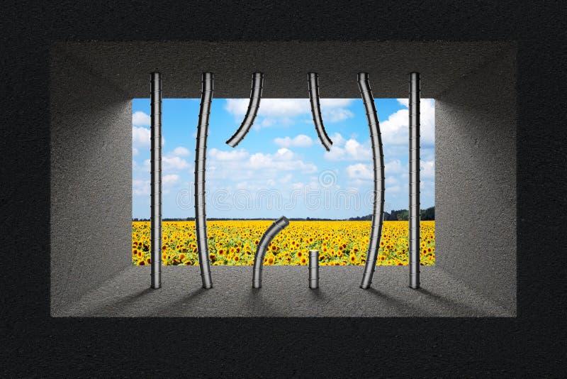 Himmel und Sonnenblumenfeld gesehen durch defekte Gefängnis-Stangen im Gefängnis lizenzfreie abbildung