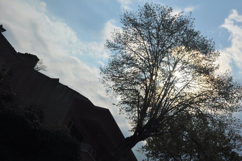 Himmelbaumschatten stockfotos