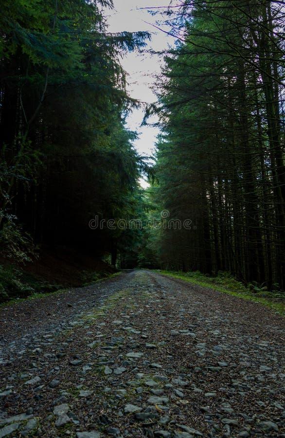 Himmellinie über den Bäumen lizenzfreie stockfotografie