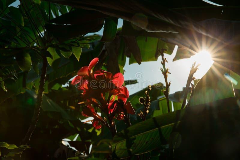 Himmelljus och blomma royaltyfria foton