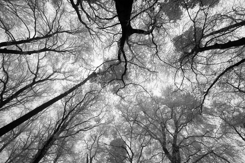 Himmelsolsken till och med vinterträdfilialerna (underifrån). arkivbilder