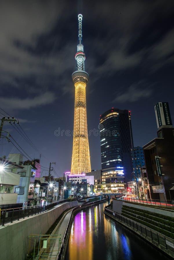 Himmelträd i Tokyo fotografering för bildbyråer
