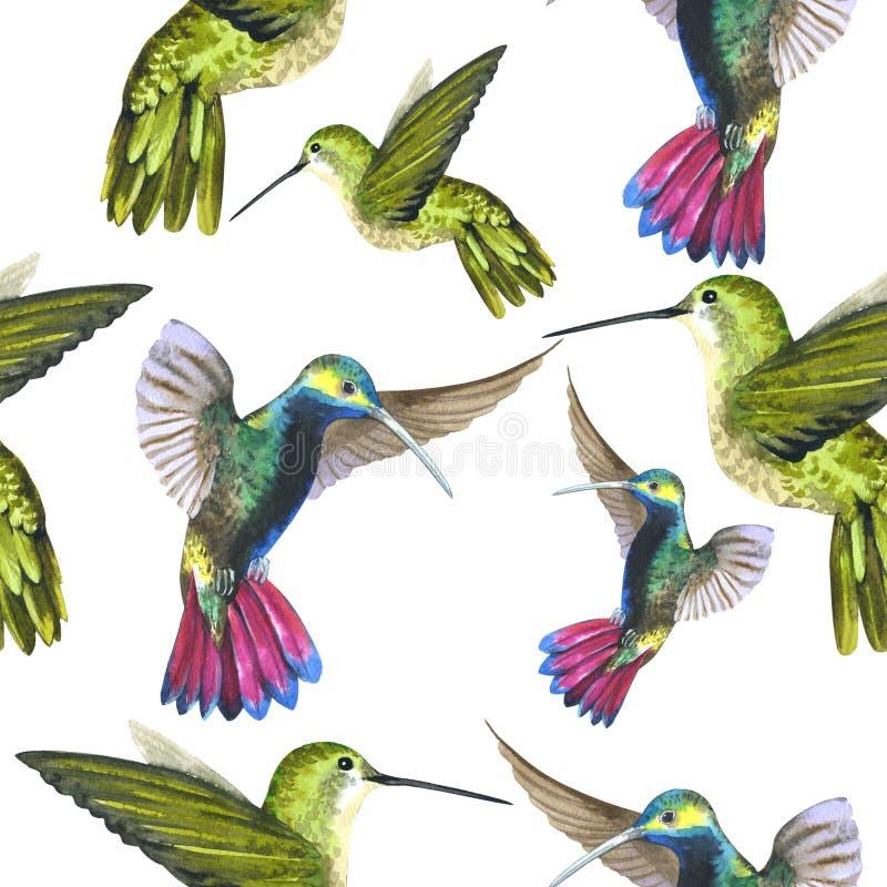 Himmelvogel colibri in einem Muster der wild lebenden Tiere durch Aquarellart lokalisiert stock abbildung