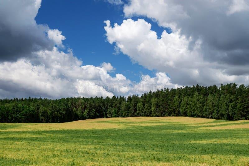 Himmelwolken-Feldwald stockbilder