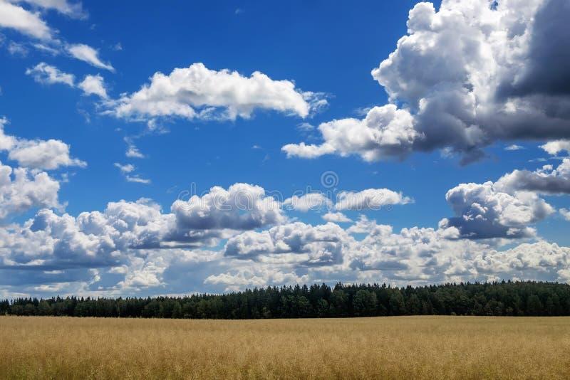 Himmelwolken-Feldwald lizenzfreies stockfoto