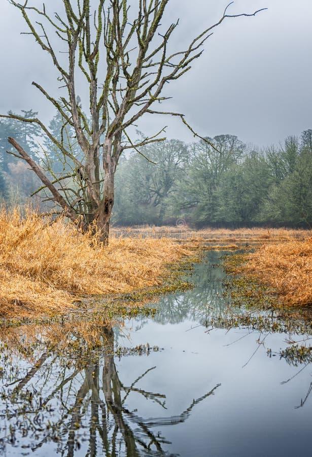 Hinderträd som reflekterar i vatten royaltyfri fotografi