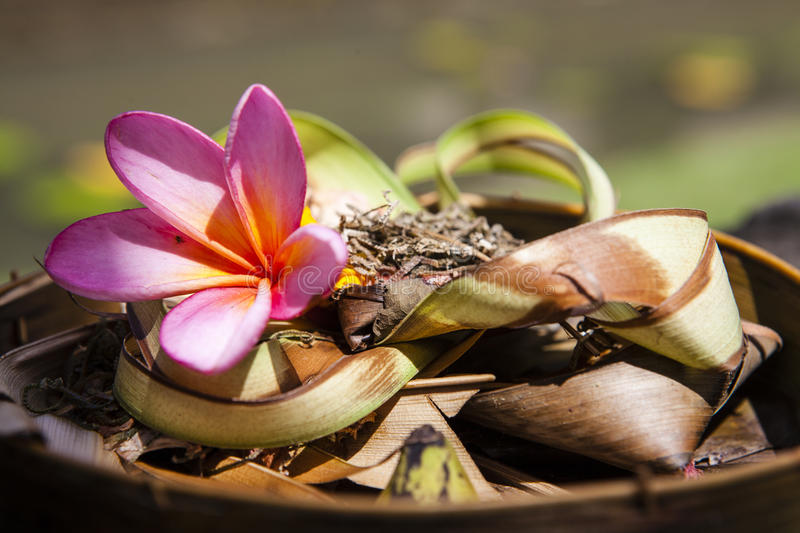 Hindu daily offering in Bali - Indonesia royalty free stock images