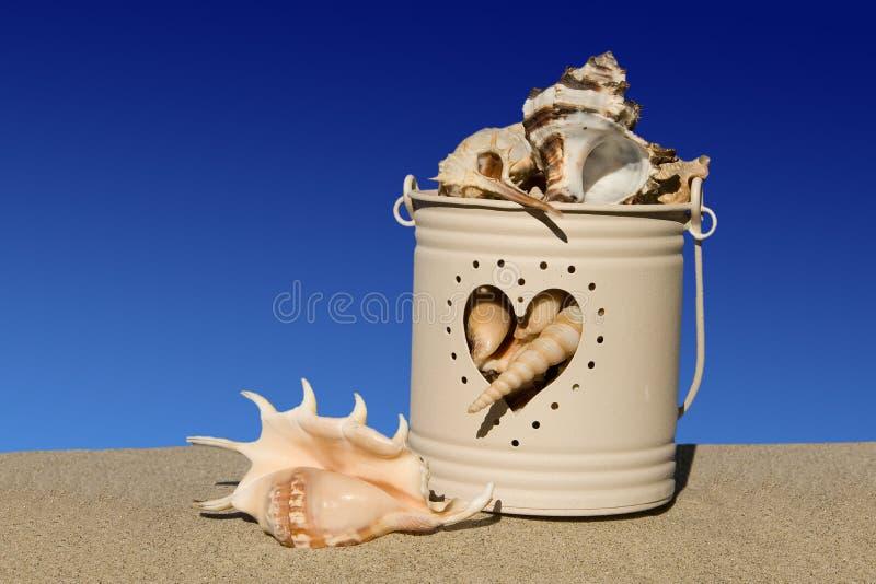 Hink av havsskal på sanden på blue royaltyfri bild