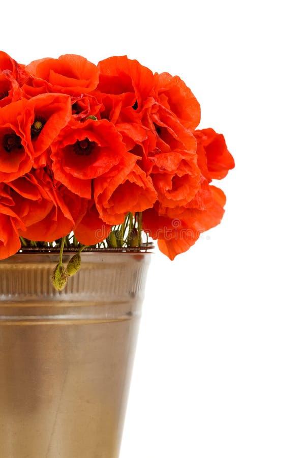 hinken blommar metallisk red royaltyfri bild