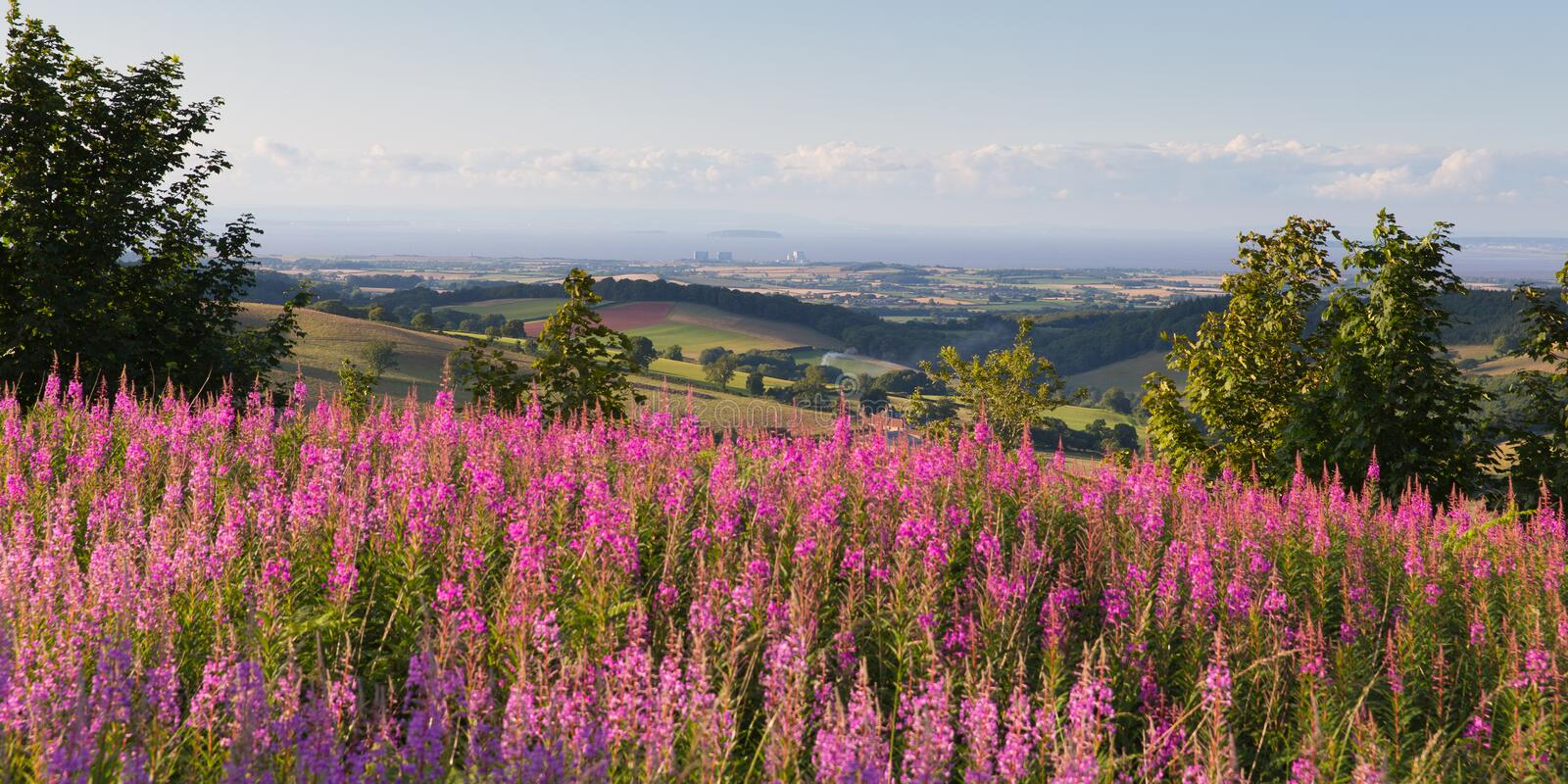 Hinkley Point Nuclear Power station fron the Quantock Hills Somerset England UK countryside with pink flowers. Quantock Hills Somerset England UK countryside stock photo