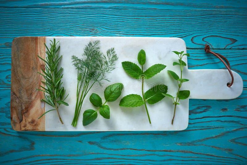 Hinojo culinario del romero de las plantas de las hierbas aromáticas foto de archivo