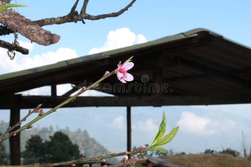 Hinter der Blume lizenzfreie stockbilder