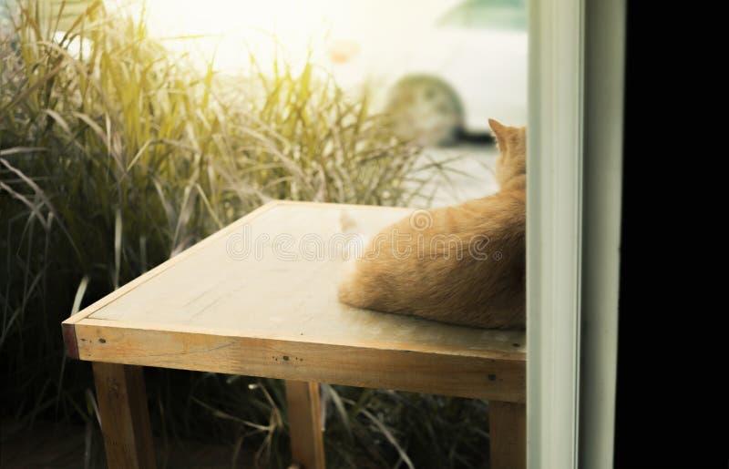 Hinter der Szene der Katze sitzend vor Haus lizenzfreie stockbilder