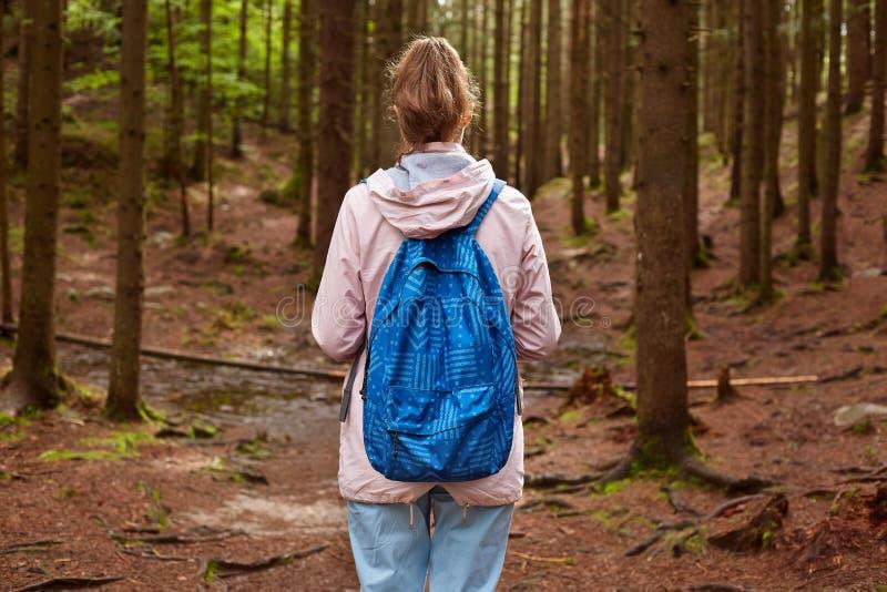 Hintere Ansicht dünnen athletischen touristischen Wanderermädchen withblue Rucksacks, der durch Bergkieferwaldweibliche Ausgabenz lizenzfreies stockfoto