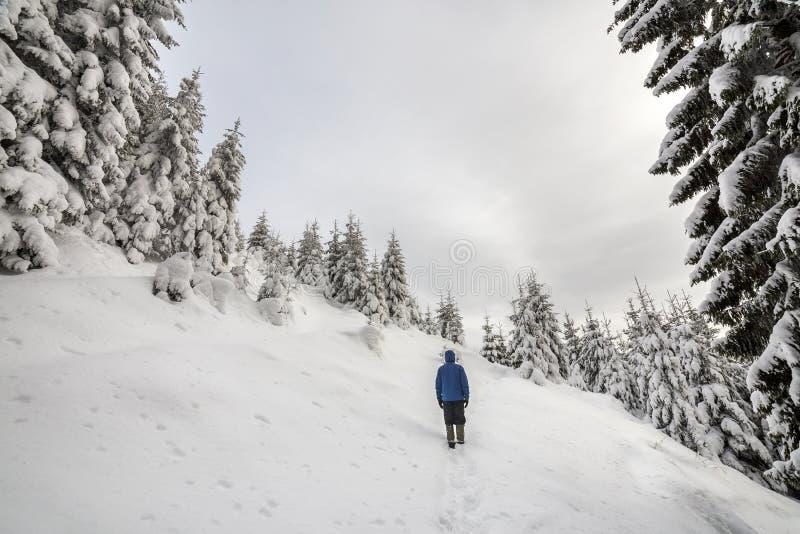 Hintere Ansicht der touristischen Wandererstellung auf steilem Berghang auf Kopienraumhintergrund von gezierten Bäumen und von kl stockfoto