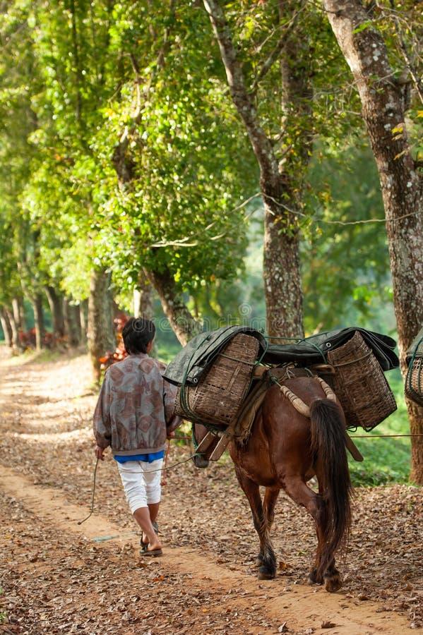 Hintere Ansicht des Landwirts mit dem Pferd, das auf dem Weg Weidenkörbe zum Teefeld trägt Pferdetransportieren Doi Mae Salong, M lizenzfreies stockfoto