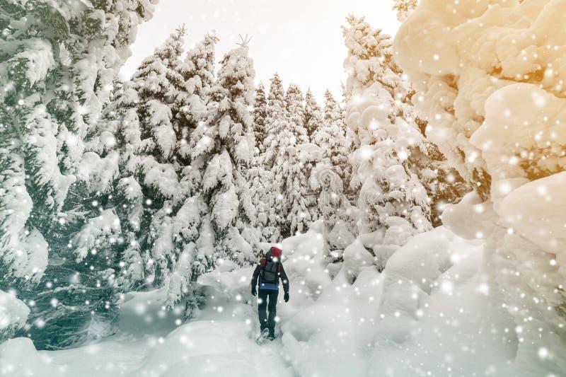 Hintere Ansicht des touristischen Wanderers mit Rucksack gehend in weißen sauberen tiefen Schnee am hellen eisigen Wintertag im G lizenzfreie stockfotos