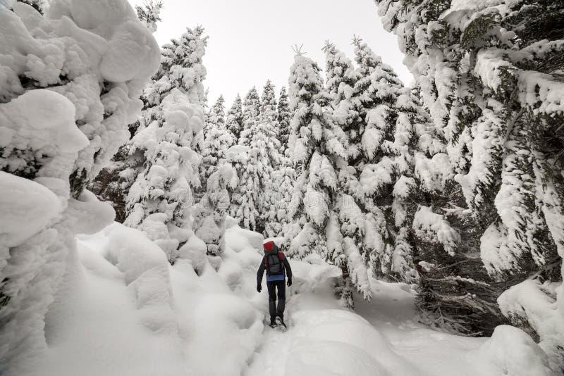 Hintere Ansicht des touristischen Wanderers mit Rucksack gehend in weißen sauberen tiefen Schnee am hellen eisigen Wintertag im G lizenzfreies stockfoto