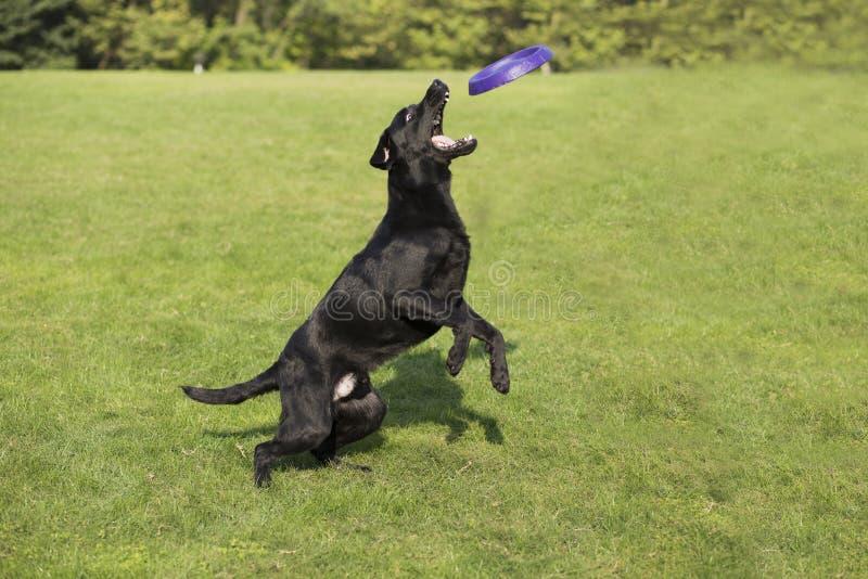 Hintere Ansicht eines Welpenhundes auf einem grauen Hintergrund stockfotografie