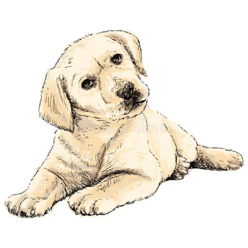 Hintere Ansicht eines Welpenhundes auf einem grauen Hintergrund lizenzfreie abbildung