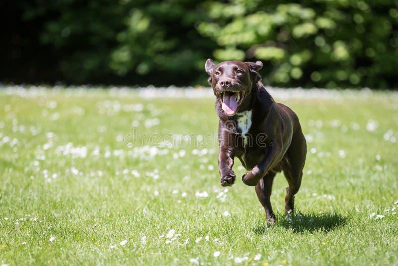 Hintere Ansicht eines Welpenhundes auf einem grauen Hintergrund stockbilder