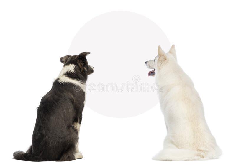 Hintere Ansicht von zwei Hunden, die ein leeres Zeichen betrachten stockfotografie