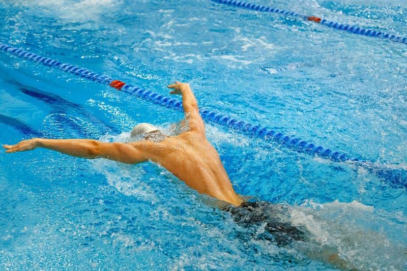 hinterer männlicher Athletenschwimmen-Schmetterlingsanschlag stockfotografie