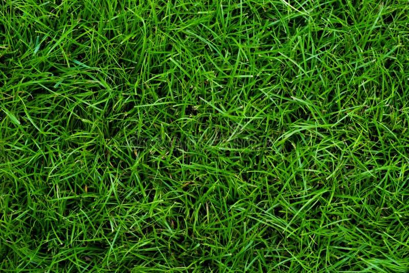 Hintergründe des grünen Grases stockfoto