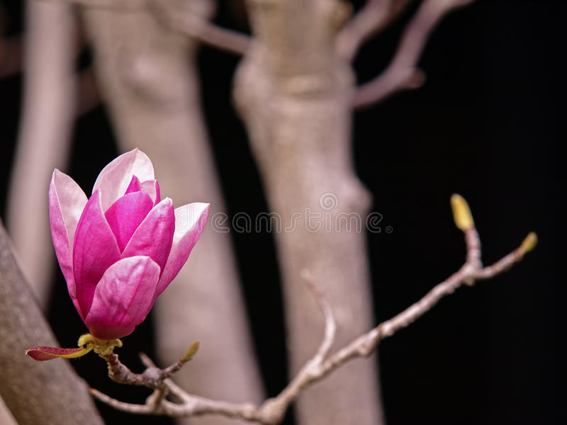 Hintergrund-Abbildung der rosafarbenen Blume stockbilder