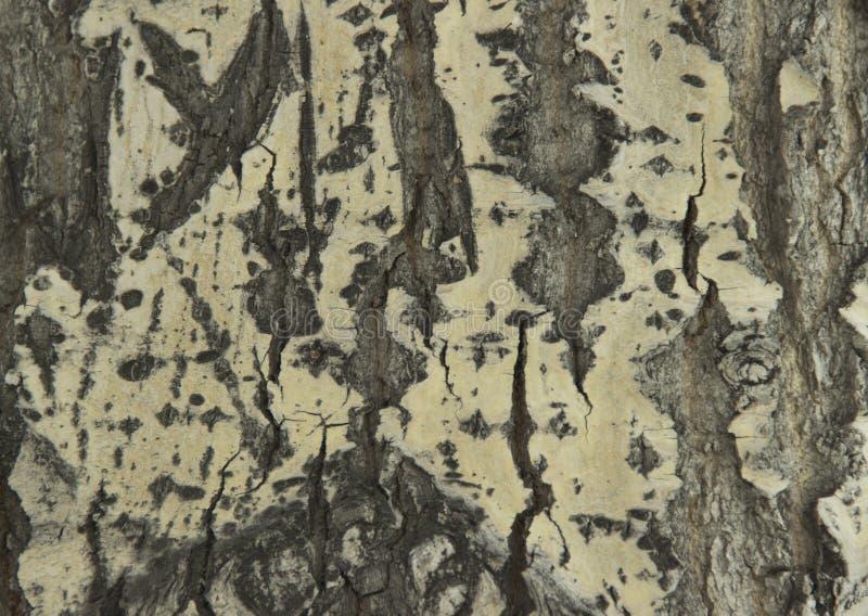 Hintergrund der Baumrinde lizenzfreie stockfotografie