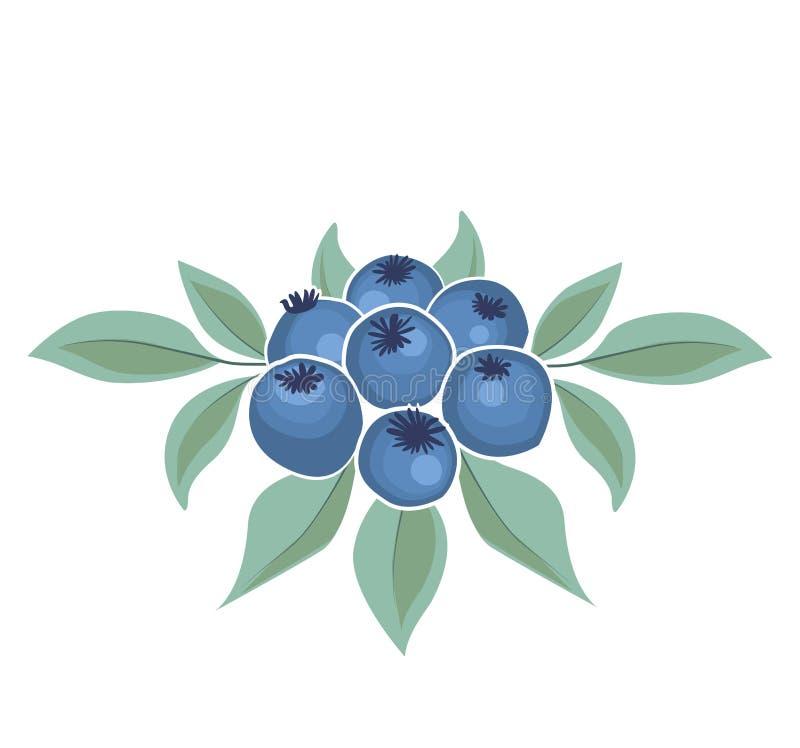 Hintergrund der Blaubeerfrucht vektor abbildung