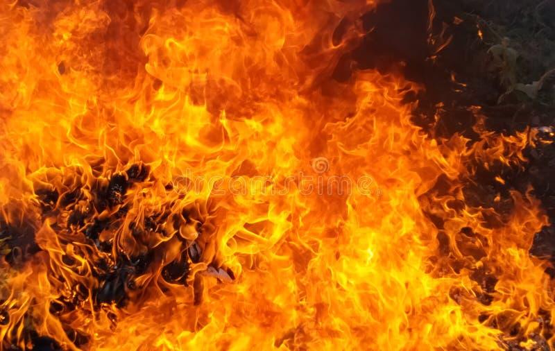 Hintergrund der Flammenflamme stockfoto