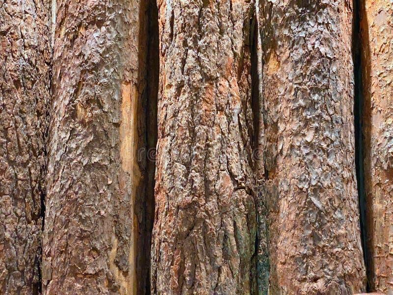 Hintergrund der natürlichen hölzernen senkrechten alten Stämme mit Rinde lizenzfreies stockbild