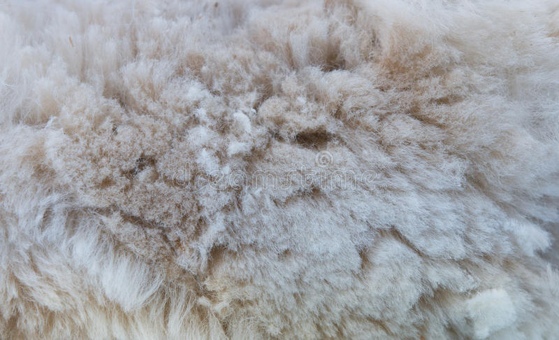 Hintergrund des Alpakavlieses stockfoto