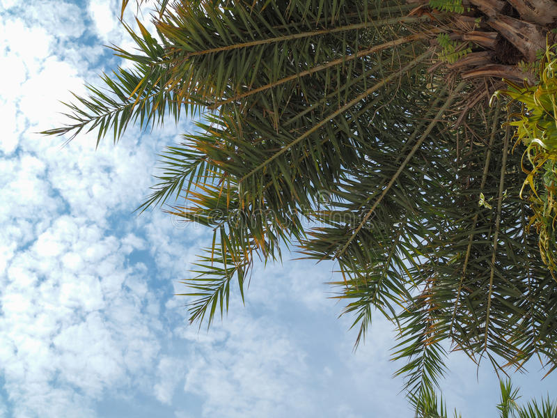 Hintergrund des blauen Himmels der KokosnussPalme lizenzfreie stockfotos