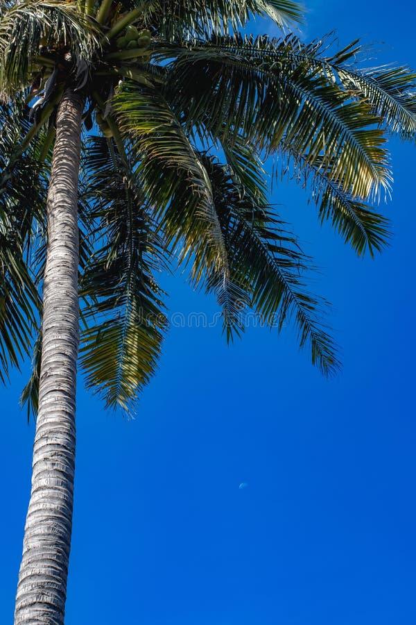 Hintergrund des blauen Himmels der Palme stockfotografie
