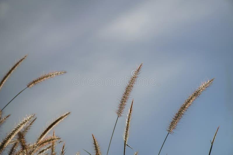 Hintergrund des Fr?hlinges oder abstrakter der Natur des Sommers mit Gras in der Wiese und blauem Himmel in der R?ckseite lizenzfreie stockbilder