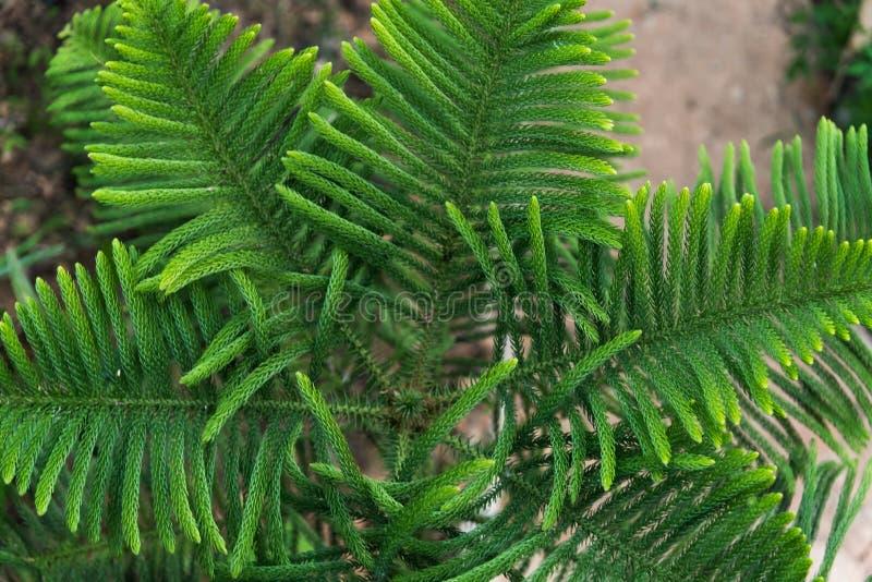 Hintergrund des grünen Blattes lizenzfreies stockfoto