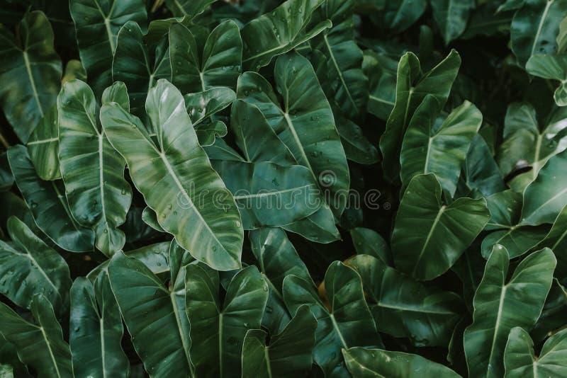Hintergrund des grünen Blattes mit Tau lizenzfreies stockbild
