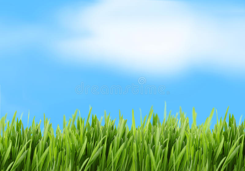 Hintergrund des grünen Grases und des blauen Himmels stockbild