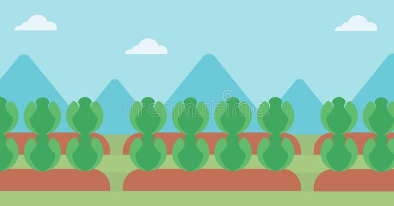 Hintergrund des Kohlfeldes stock abbildung