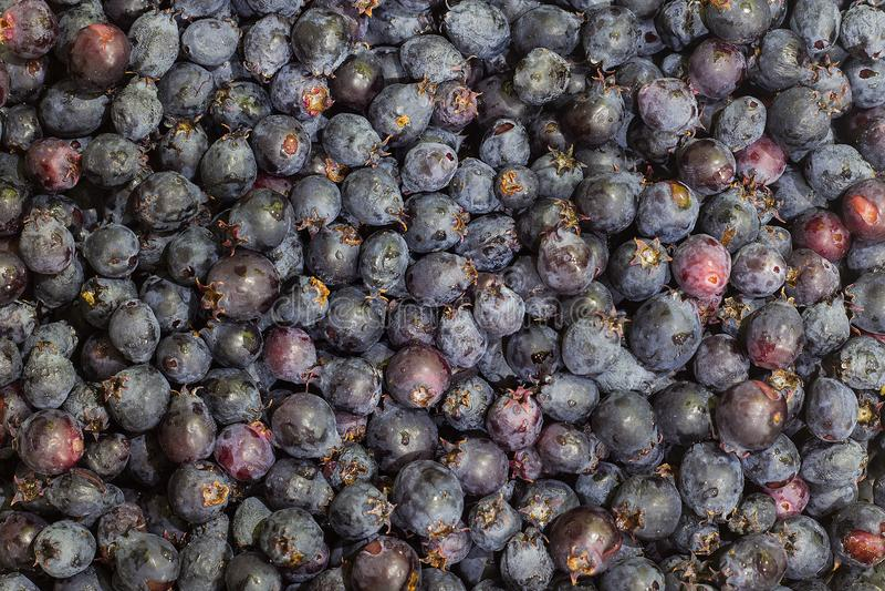 Hintergrund des Shadberry stockfotos