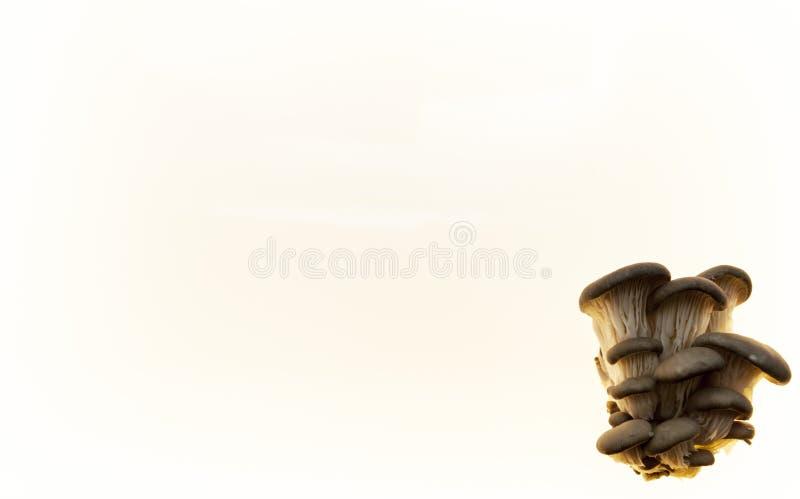 Hintergrund für Pilzdiätpilzmenü-Pilzflieger Hintergrund für pilzartige Apotheken stockbilder